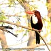 King fisher-2