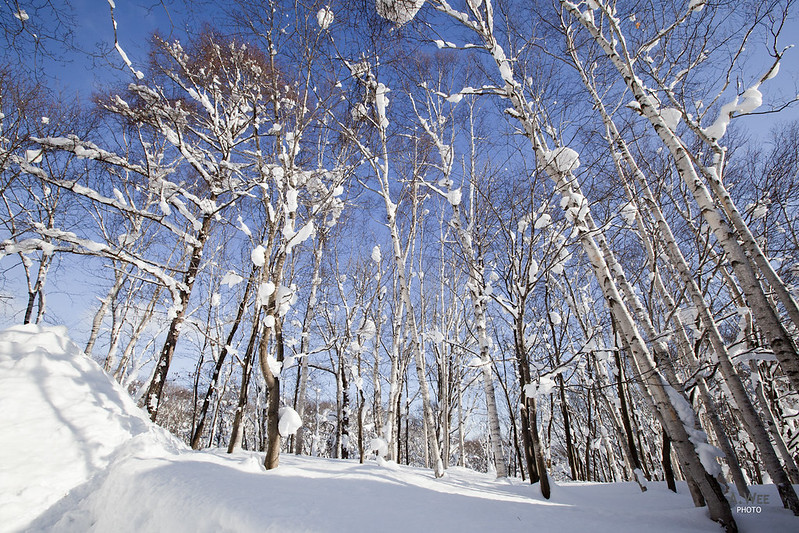 Winter Landscape in Niseko