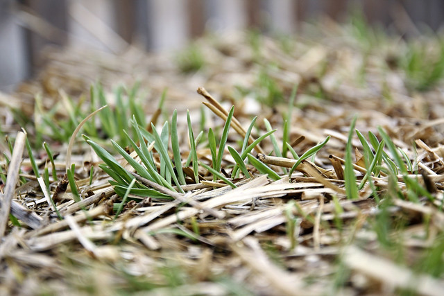 growing bale of hay