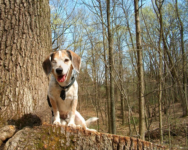 Smiling on stump