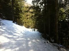 Aufstieg Pircher Alm durch den Wald