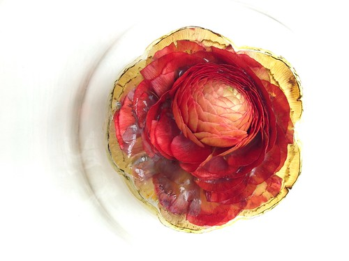 Red ranunculus flower stuck to glass