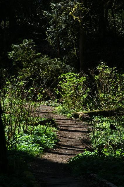 Hiking Forrest Park
