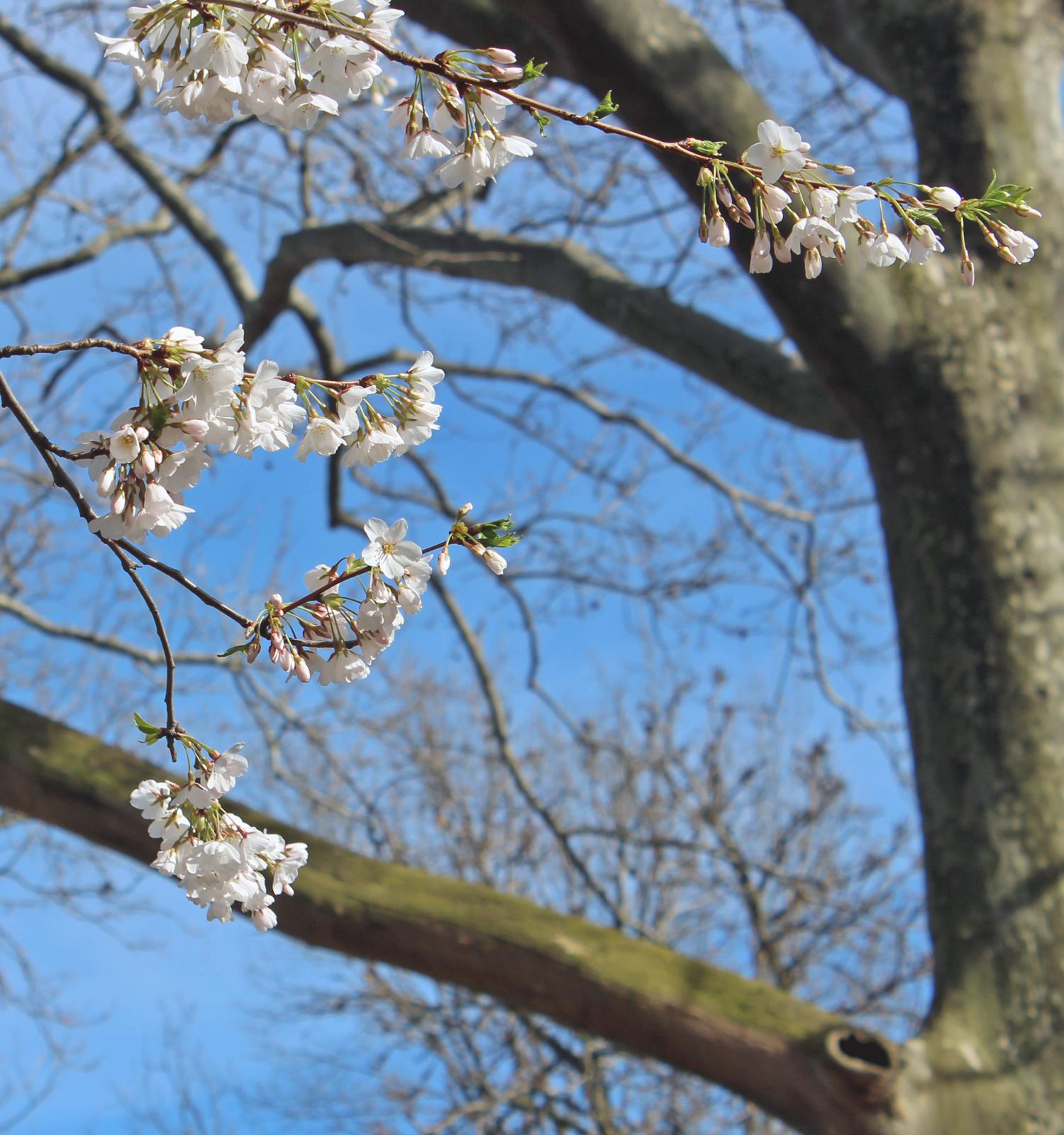 white-flowering-tree