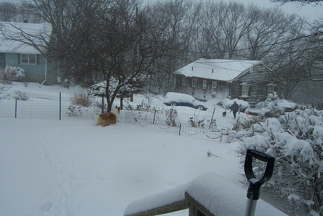 8 March 2013 blizzard - Kip has spotted Joel and Bob going for a walk...woof woof!