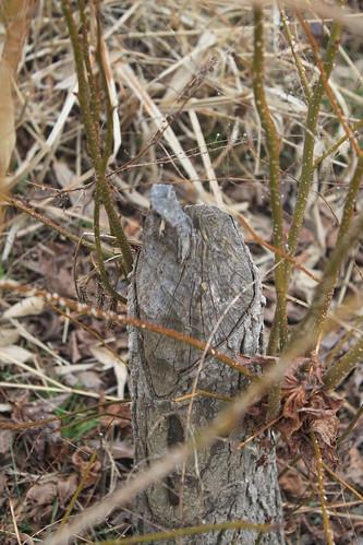 Julie J Metz Wetlands Hike - Signs Of Beavers