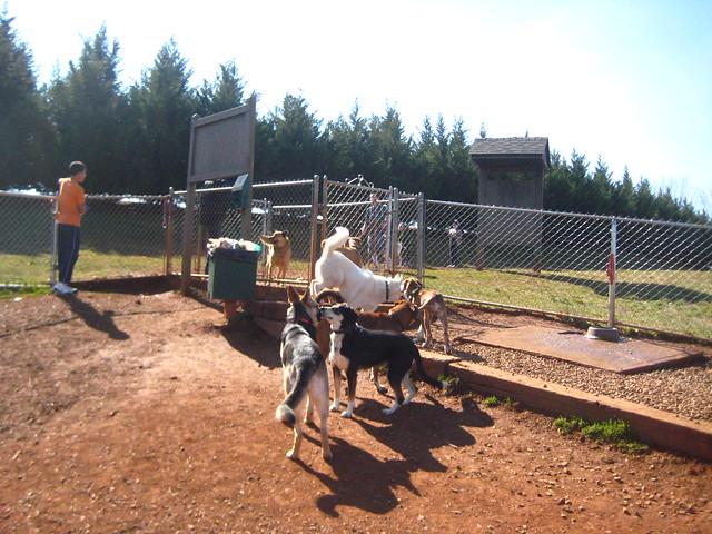 Dog park Sunday