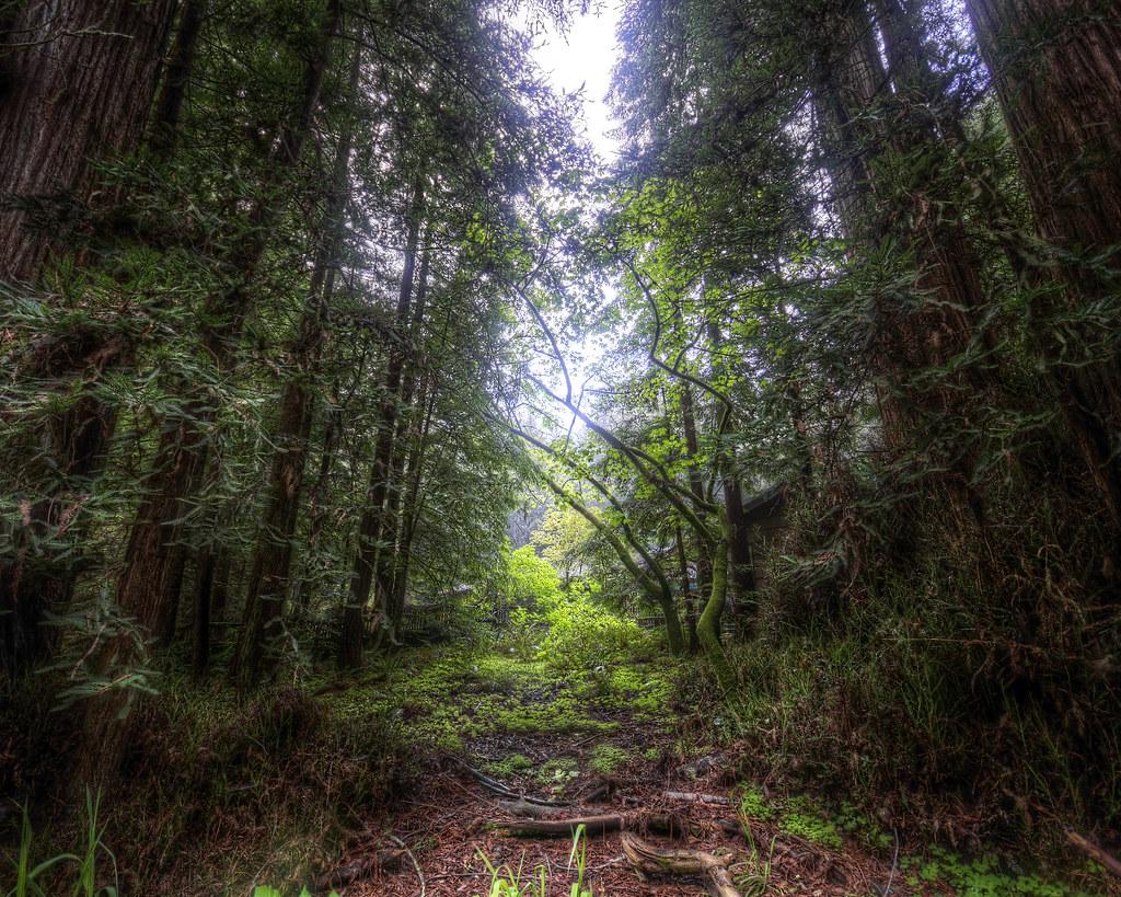 A Redwood Chapel