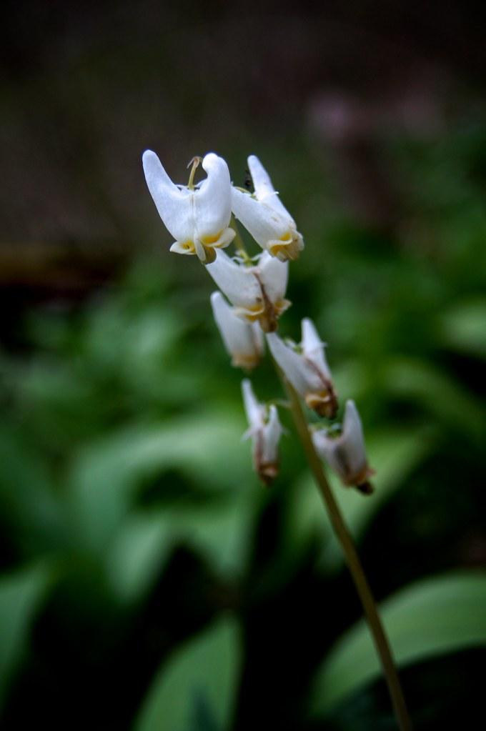 Woodland Flowers 2