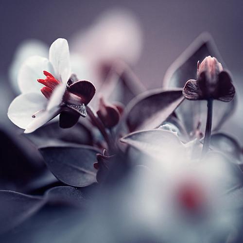 photo by Iwona Drozda-Sibeijn