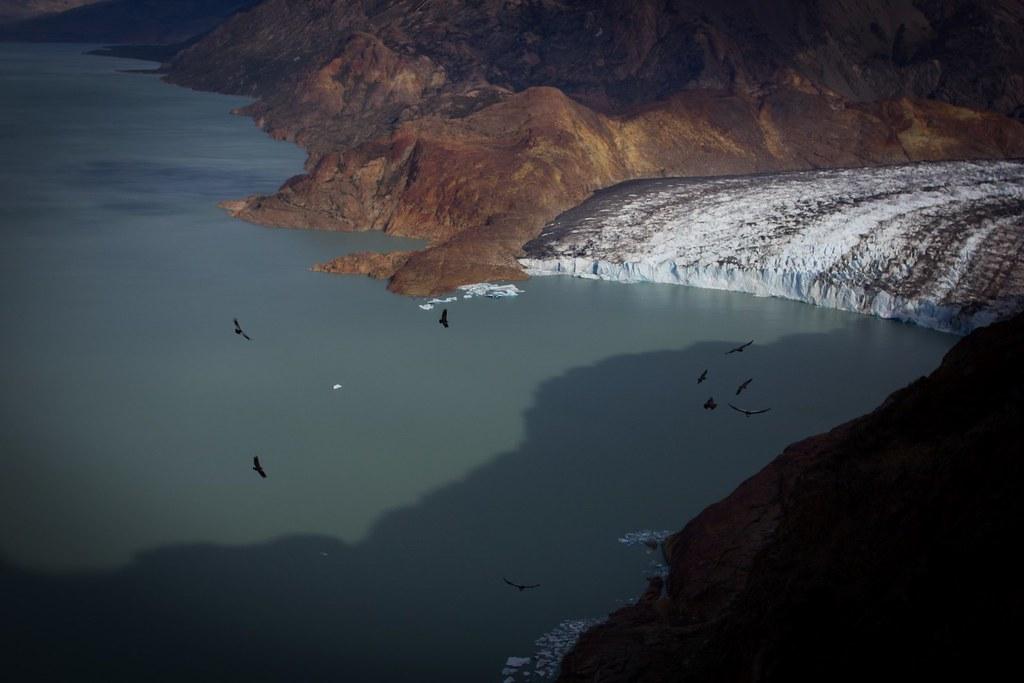 Glaciar Viedma calves into Lago Viedma. A huge amount of condors soar high above. Los Glaciares National Park. Patagonia. Argentina.