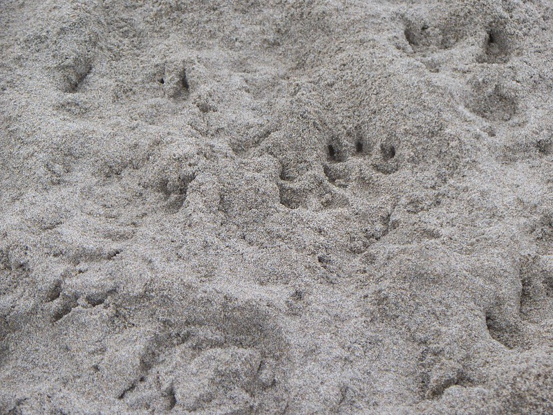 dog prints - ALK 4-2013