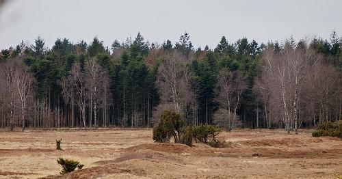 Gråhede and Kompedal Plantage