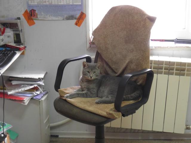 Кот в кресле // Cat in chair