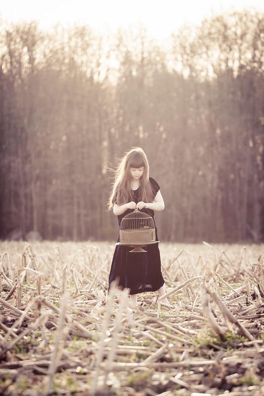 An empty cornfield