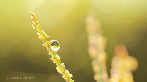 Dew of Life II