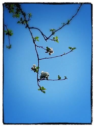 2013-04-10 15.45.52_Snapseed