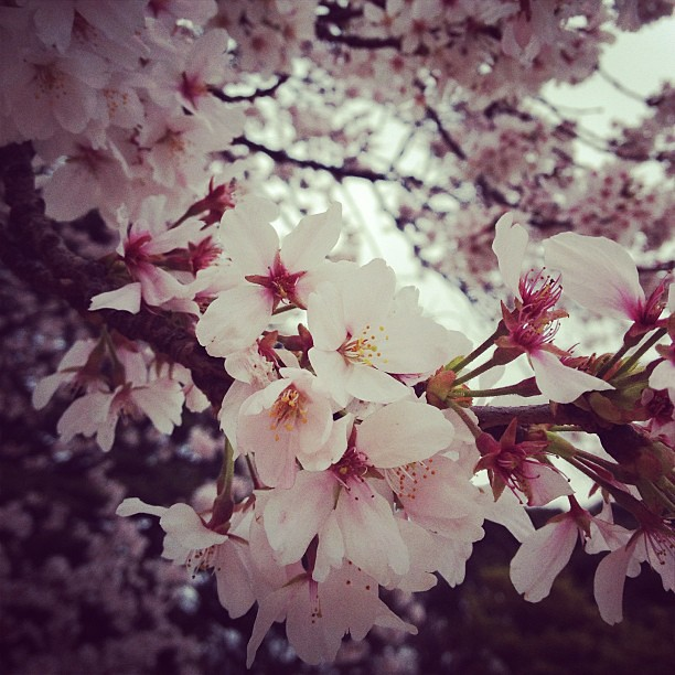 We came just in time for sakura season :D So in love with Tokyo right now. I don't want to leaaaave :(