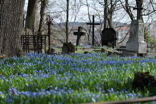 The Old Bernardine Cemetery in Vilnius / Senosios bernardinų kapinės Vilniuje by infusionn