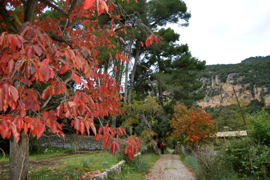 Excursión al Puig des Teix