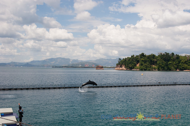 Dolphin and Whale Show-15.jpg