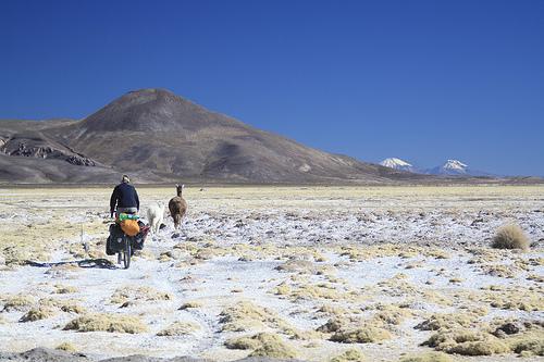 Chasing llamas to Sajama, Bolivia.