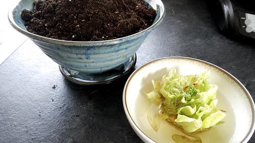 Lettuce Trick 4