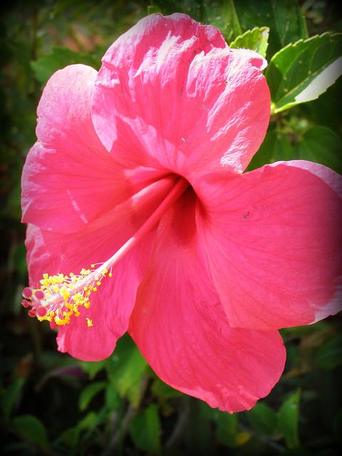 flowers in Fiji