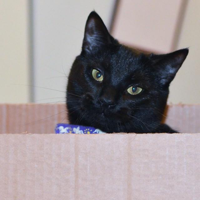 Luna in the Box