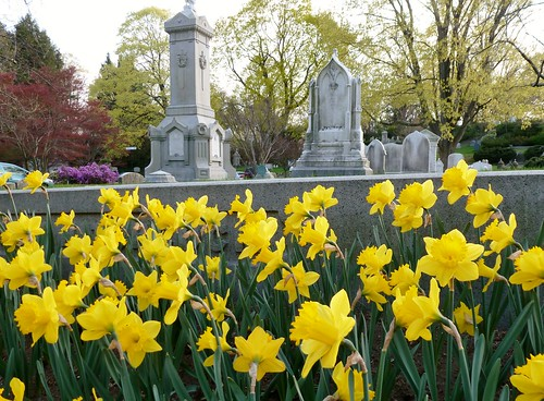 Daffodils and tombstones