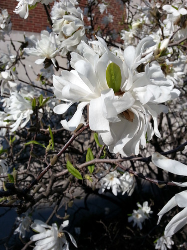 20130412_Spring_Flowers_007