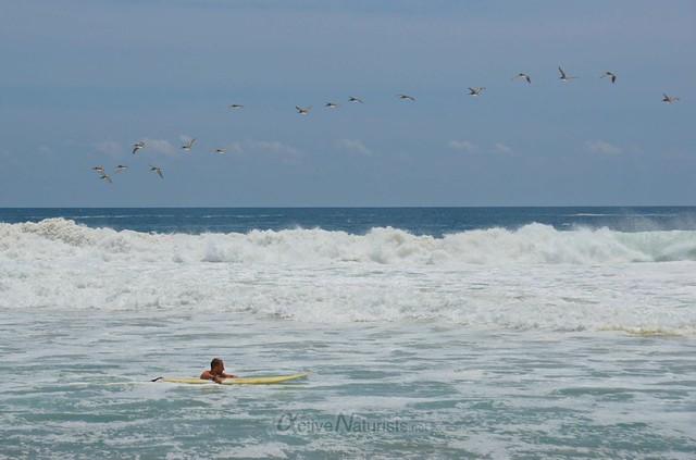 naturist surfer 0013 Zipolite, Oaxaca, Mexico