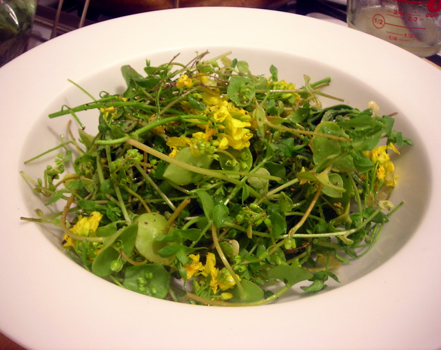 Spring greens salad (chickweed, baby arugula, winter purslane) with yu choi flowers
