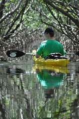 Kayaking in Weedon island preserve/Tampa bay