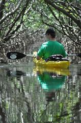 Kayaking in Weedon island preserve/Tampa bay