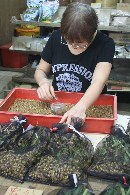 Bird Market in Hong Kong