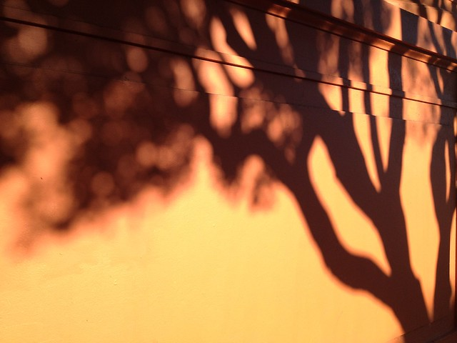 Tree shadows on orange wall, Edison Elementary School