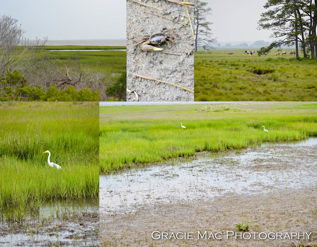 1206_chincoteague_147_2