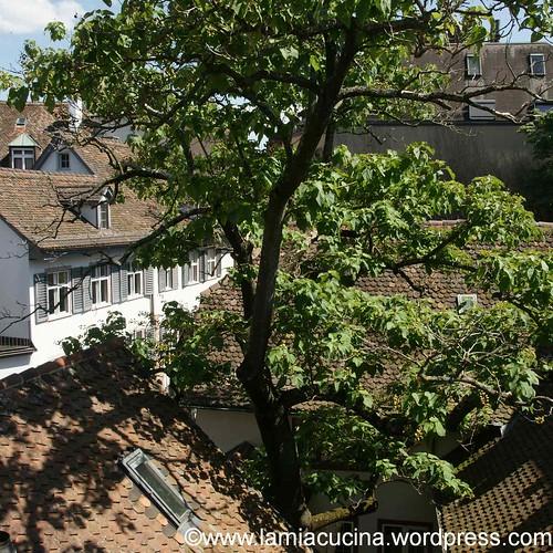 Baum 0_2012 06 23_5592