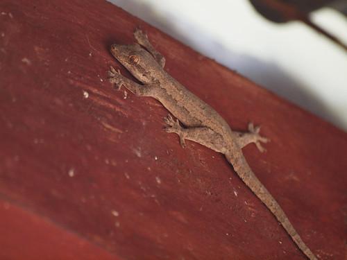 208/366 - Gecko by Flubie