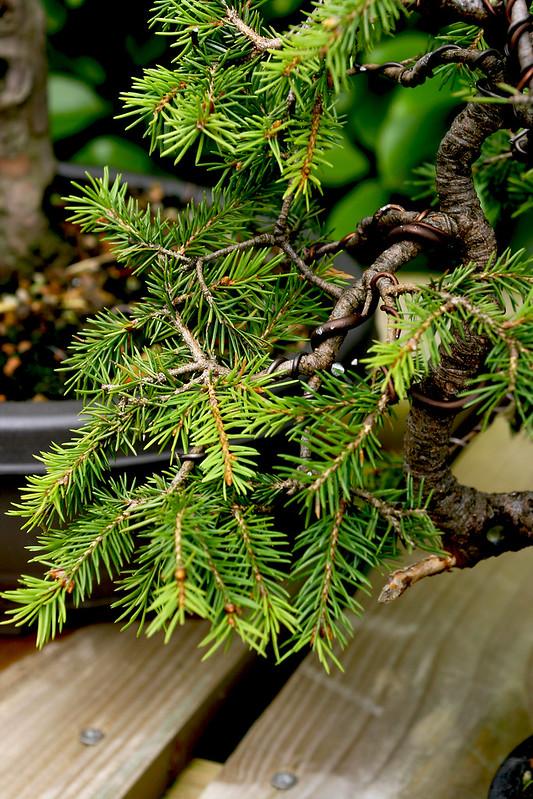 Branch detail 2 Aug 12