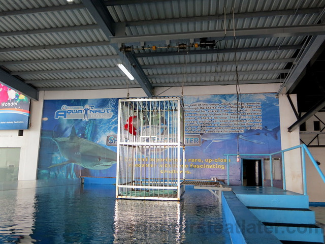 Manila Ocean Park's shark encounter