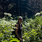 Overgrown trail - Gunsight Pass Trail