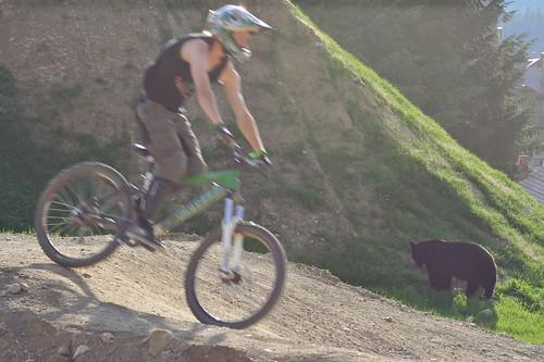 Biking with bears