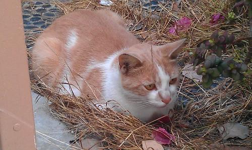 Duncan the Cat 2 8-6-12
