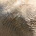 Zoo Texture
