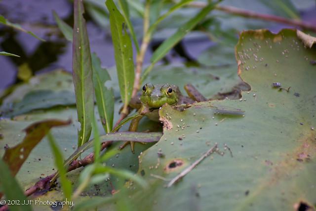 2012_Jul_06_Frog Pond_025