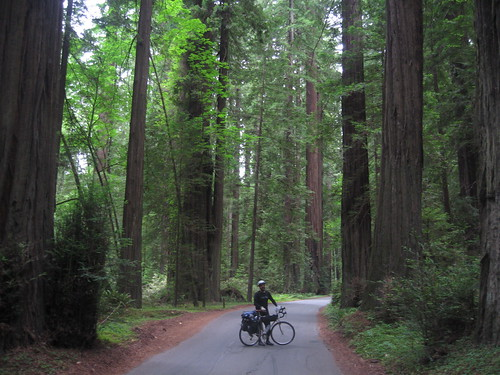 Matttole Road in Humboldt Redwoods State park