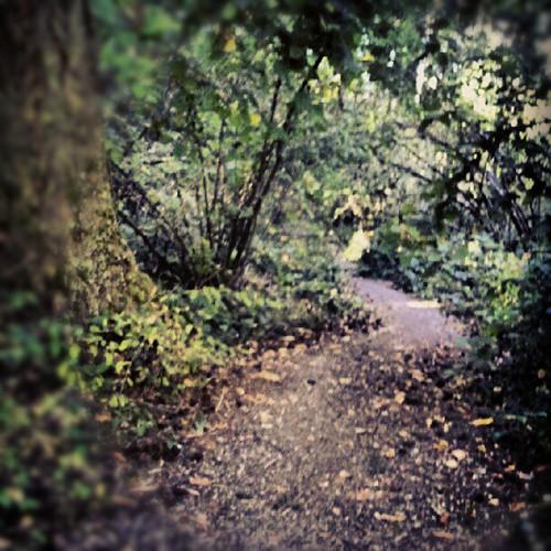08.24.2012 :: 366/237 ...::... Path by Echo9er