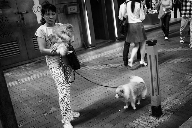 Dogs at the street 13